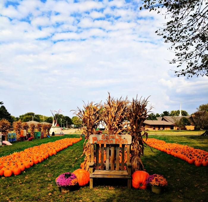 Selmi's Pumpkin Patch, Corn Maze & Farm Market