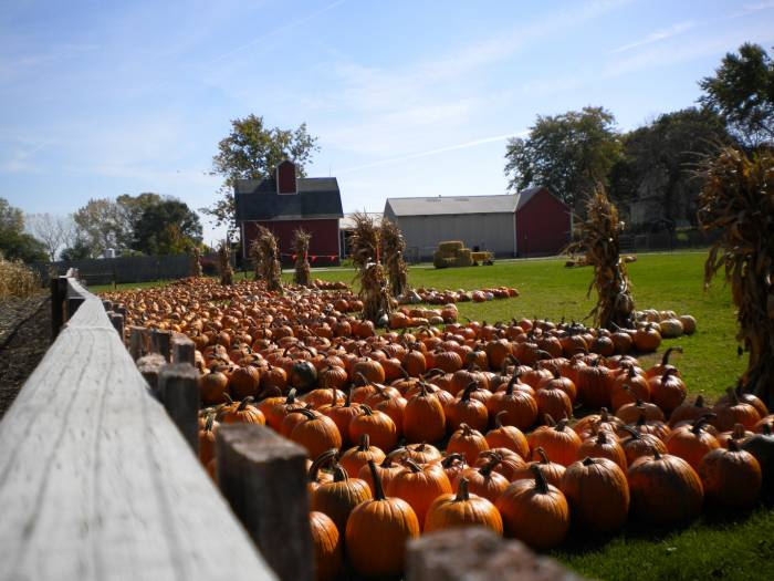 Johnsons Pumpkin Stand and Corn Maze