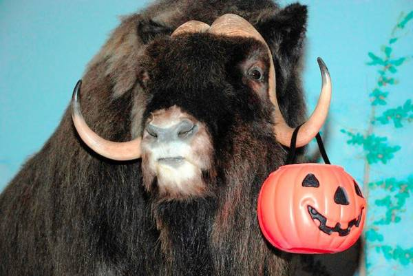 Halloween Event at the Midwest Museum of Natural History